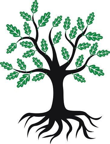 364x474 Free Oak Icon 166944 Download Oak Icon