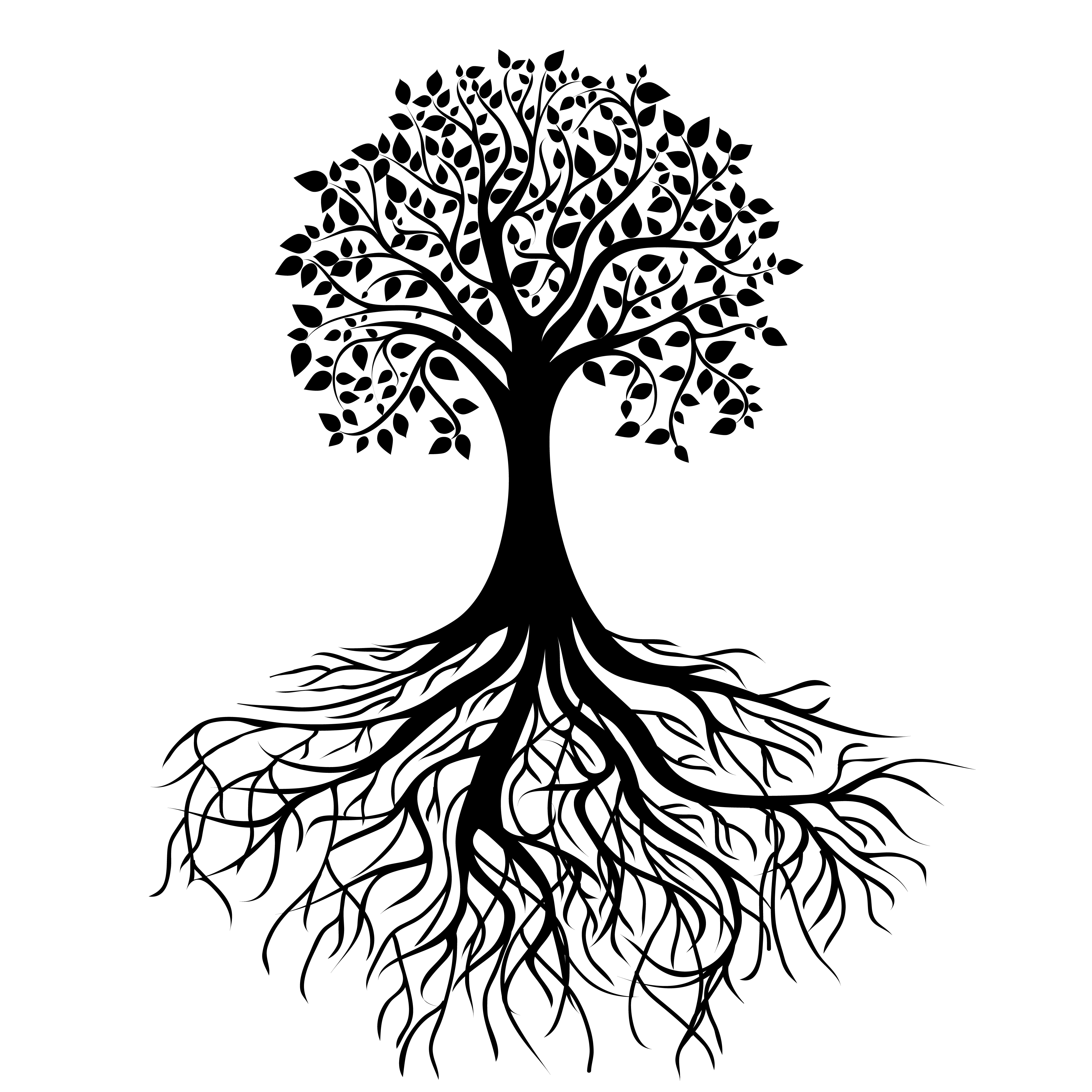 4167x4167 Oak Tree Silhouette With Roots