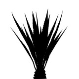 160x160 Silhouette Of Palm Tree Cycad Stock Image And Royalty Free