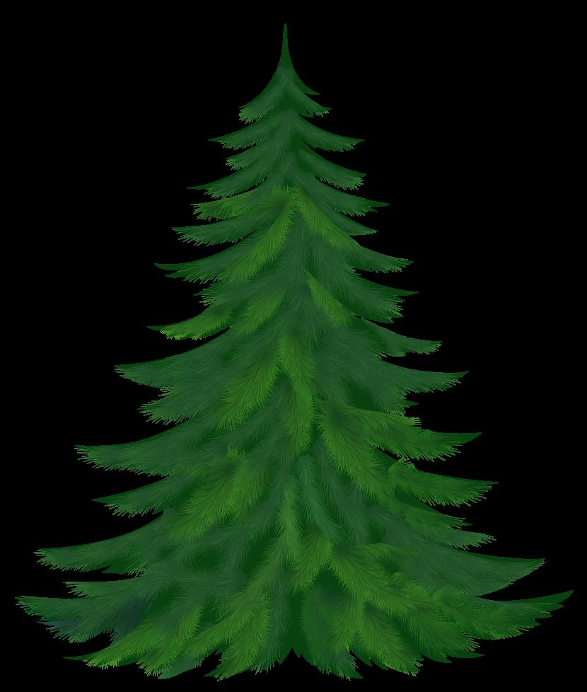 830x978 Pine Trees Clipart