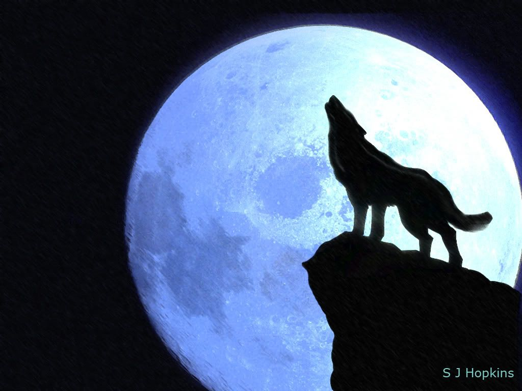 1024x768 Picture Of A Wolf Howling At The Moon