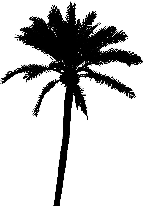 1043x1500 20 Palm Tree Silhouette (Png Transparent) Vol. 2