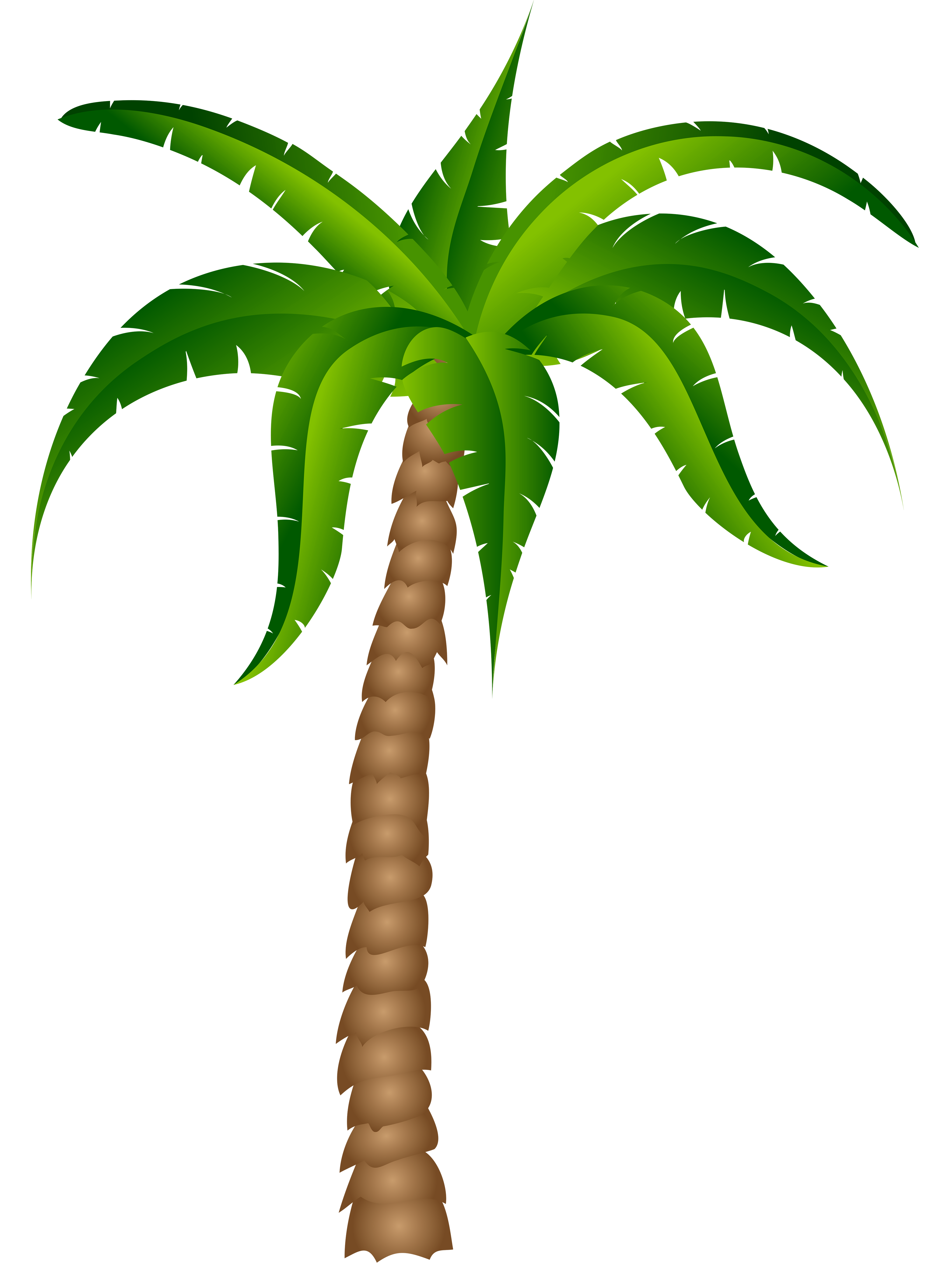 3672x4952 Palm Tree Clipart Picture Art Palm Trees