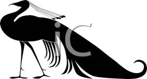 300x162 Peacock Silhouette