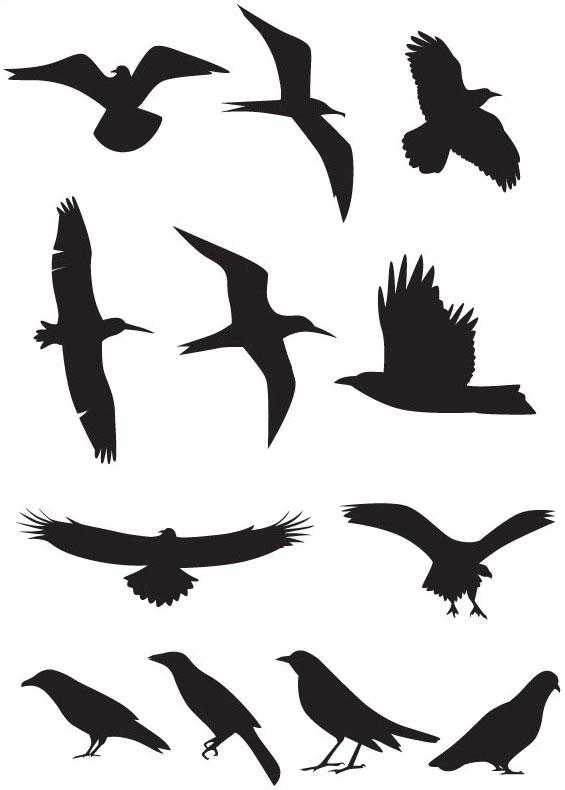565x790 Birds Silhouette Animal Bird Silhouette Free Vector 4vector