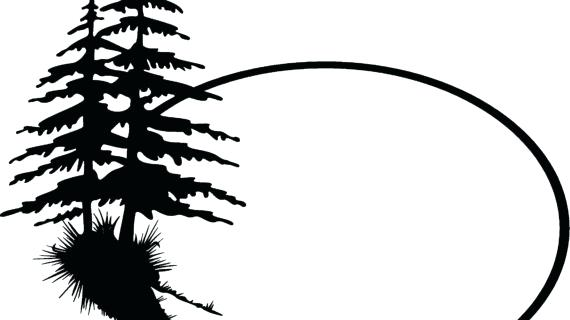 570x320 Simple Pine Tree Drawing Black And White Pine Tree Outline Sayings