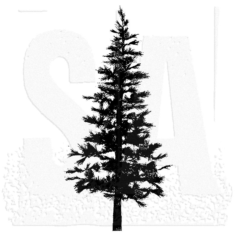 800x800 Tim Holtz P2 1258 Pine Tree.png Tattoo Silhouettes
