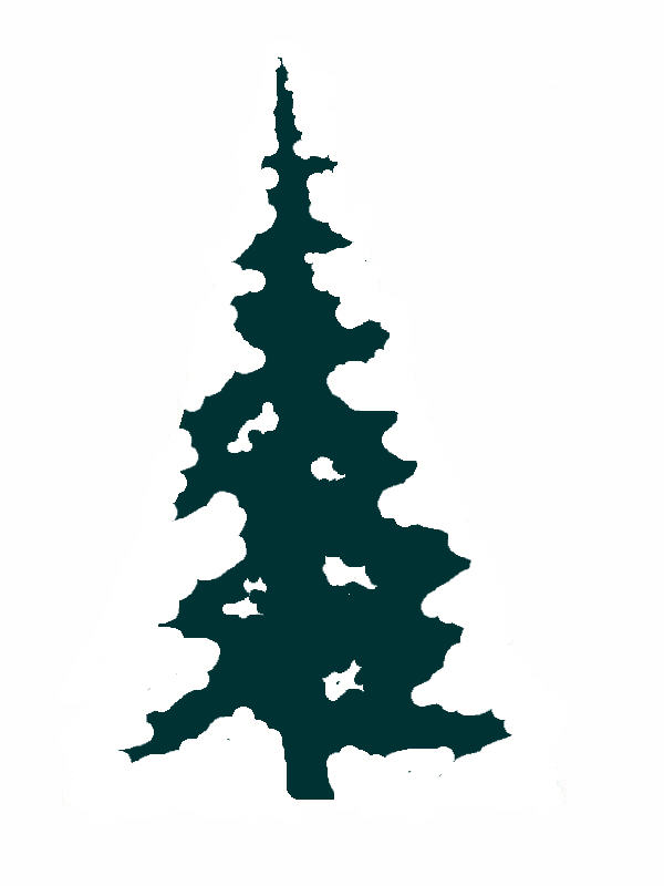 600x800 Clip Art Evergreen Tree Silhouette Fir Clipart Pencil And In Color