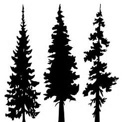245x245 Image Result For Evergreen Trees Silhouette Printable