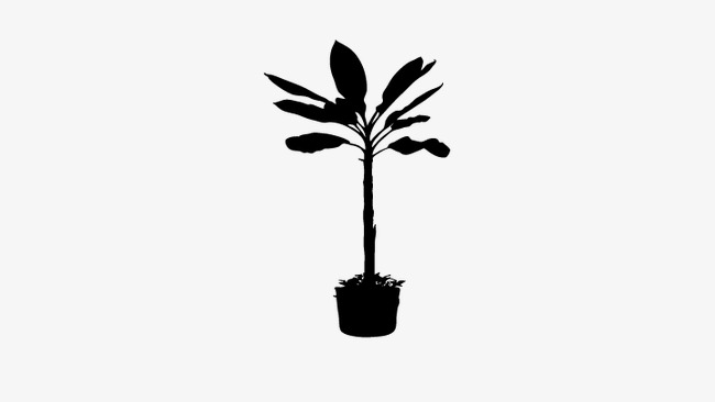 650x366 Plant Silhouette, Pot Silhouette, Vector Plant Png And Vector