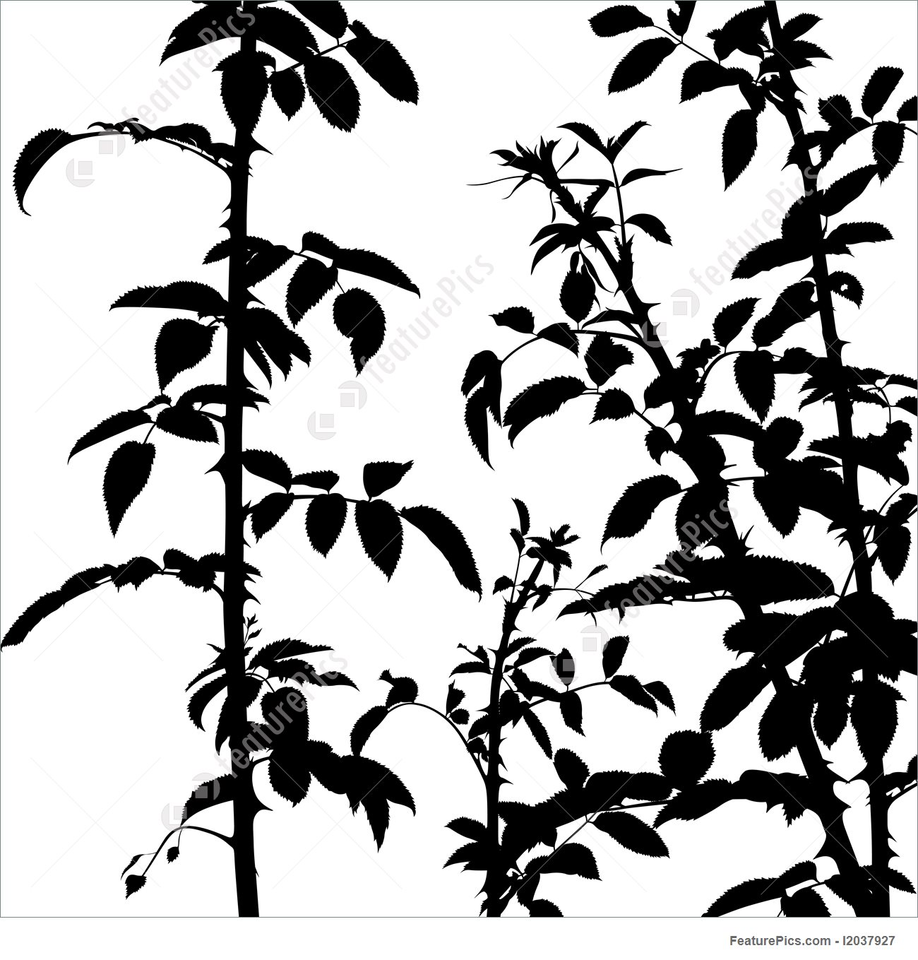 1300x1359 Plants Shrub Silhouette