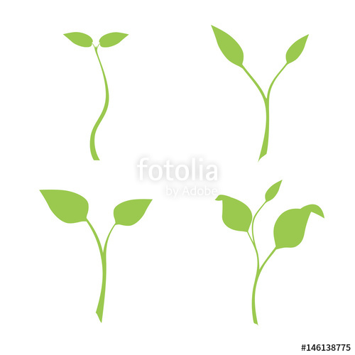 500x500 Silhouette Of Plants, Vector, Set Of Illustrations With Phases
