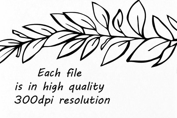 570x379 Doodle Climbing Plant Clipart, Hand Drawn Herbs Clipart, Leaves