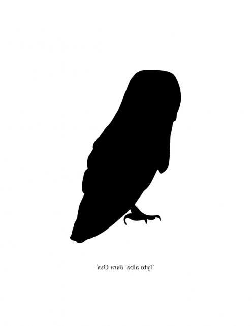 496x642 Barn Owl Silhouette