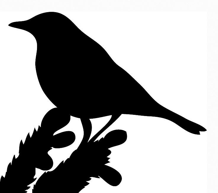 737x652 Crow Clipart Branch Silhouette