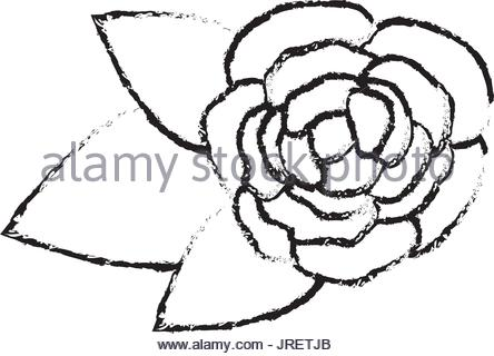 444x320 Blurred Silhouette Bud Flower Floral Icon Design Vector