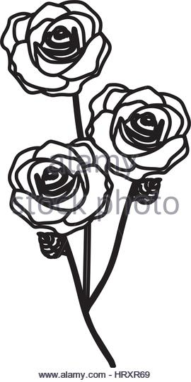 270x540 Silhouette Of Roses Stock Photos Amp Silhouette Of Roses Stock