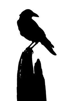 236x354 Vector clip art of bird silhouette drawn from black dots Public