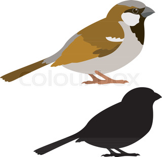 320x310 Silhouette Of Sparrow Stock Vector Colourbox