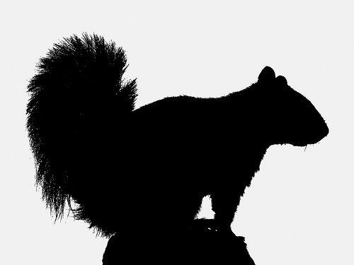 500x375 Squirrel Silhouette