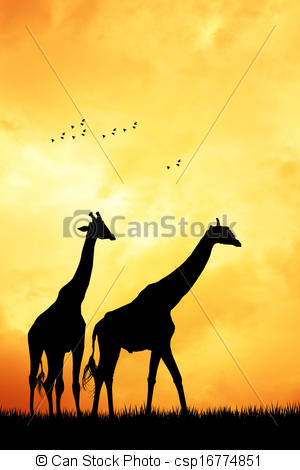 300x470 Giraffe