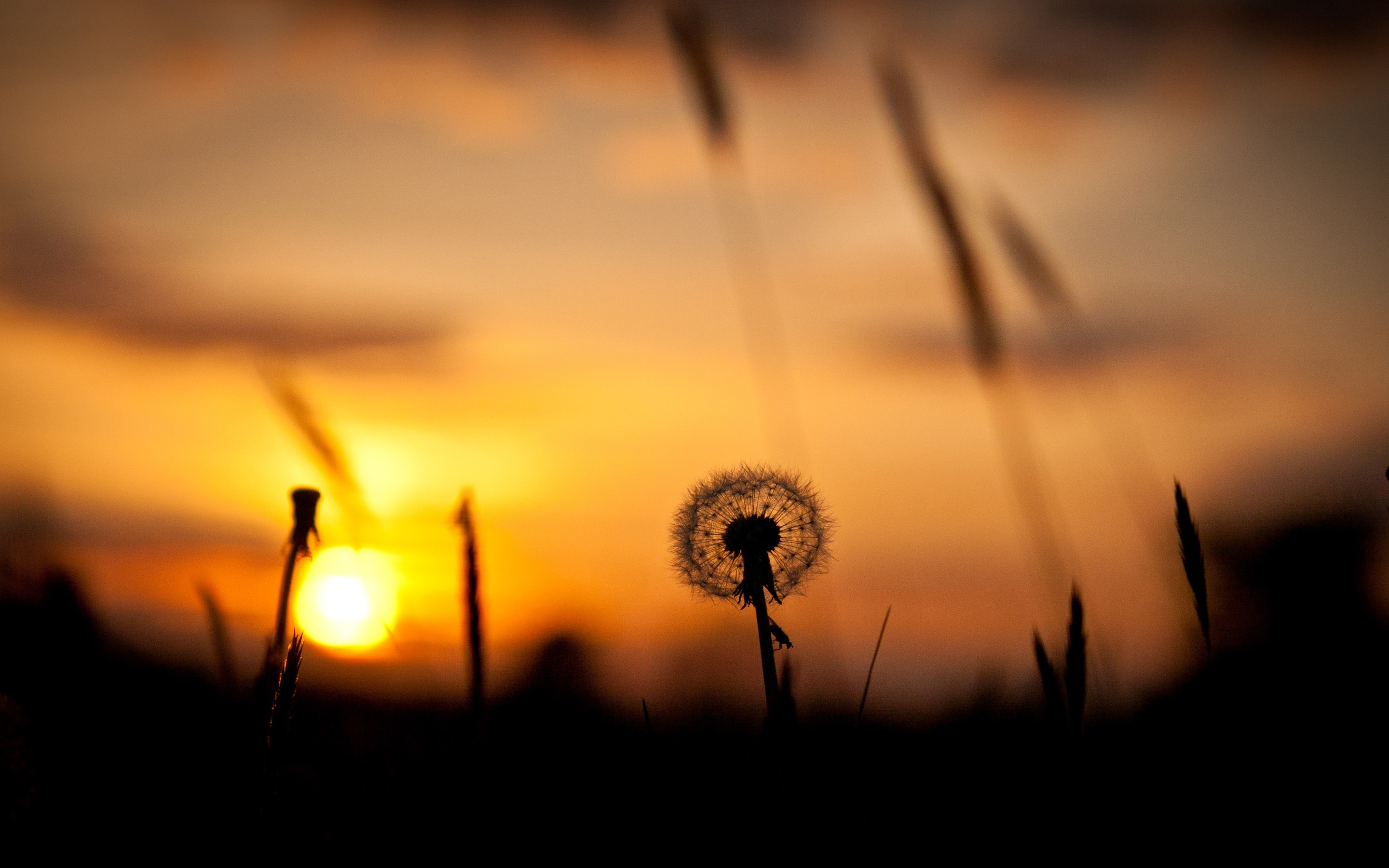 2880x1800 Nature Sunset, Grass, Dandelion, Silhouette, Red Sky Wallpaper