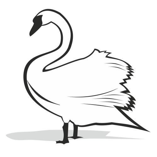Silhouette Swan