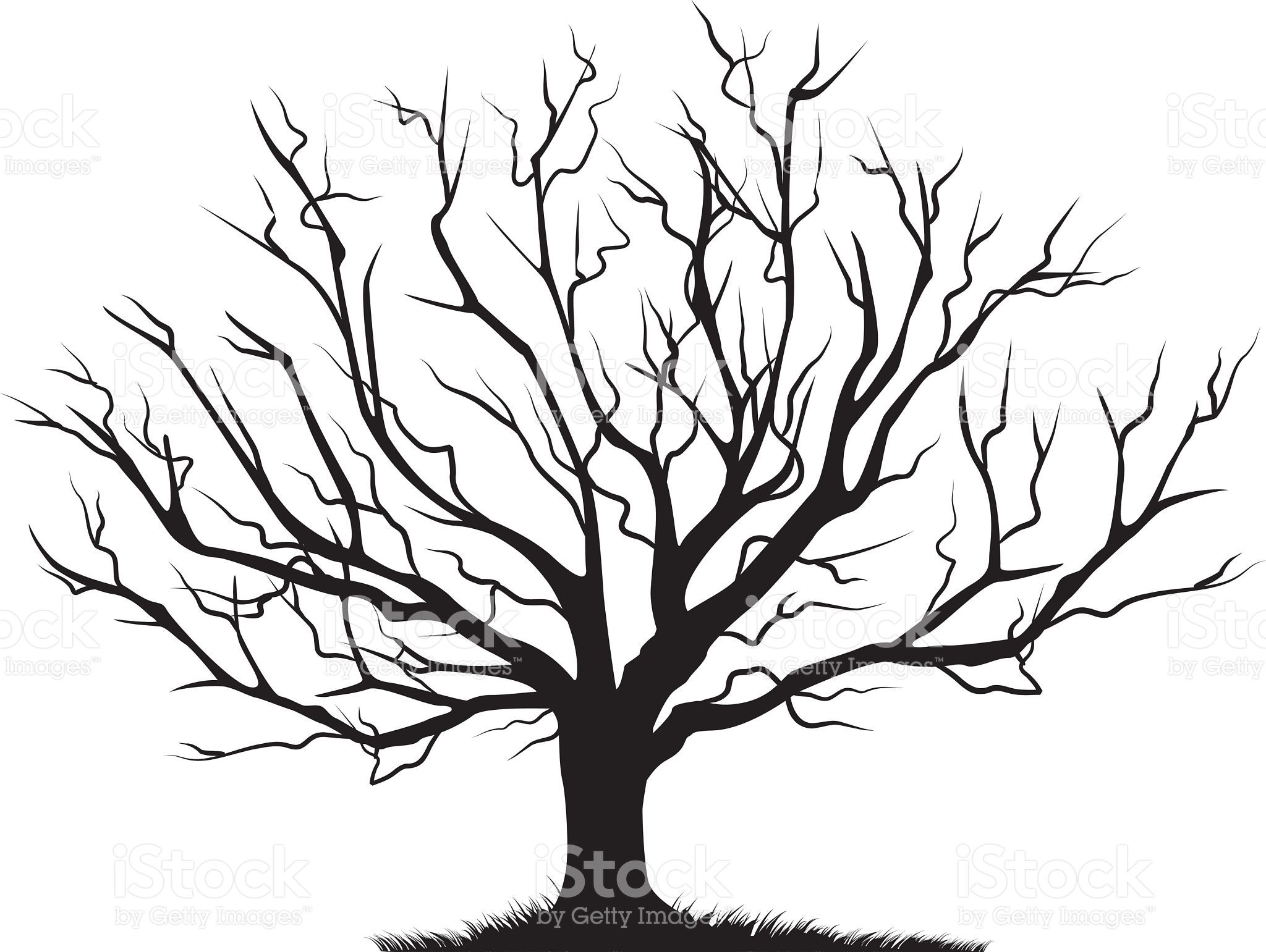2048x1541 Deciduous Bare Tree With Empty Branches Black Silhouette Isolated