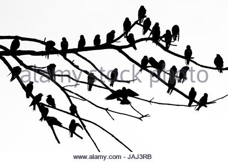 450x320 Silhouette Of Dead Tree Branches Stock Photo, Royalty Free Image