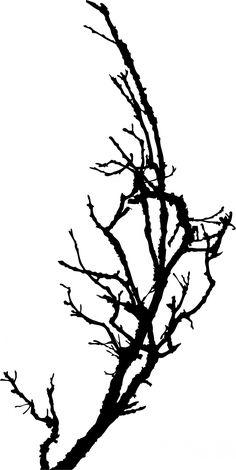 236x470 Birch Tree Silhouette Ornament 12 Black And White