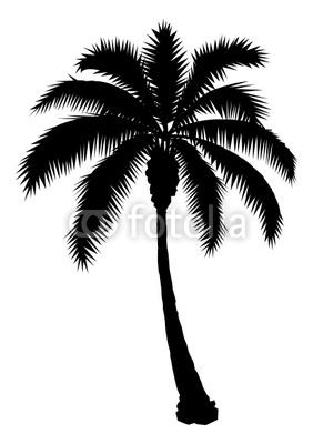 282x400 Palm Tree Silhouette
