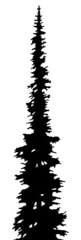 166x492 Image Result For Evergreen Stencil Tattoos