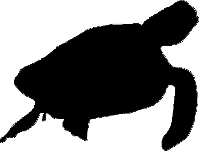 640x486 Tortoise Silhouette Clipart Panda