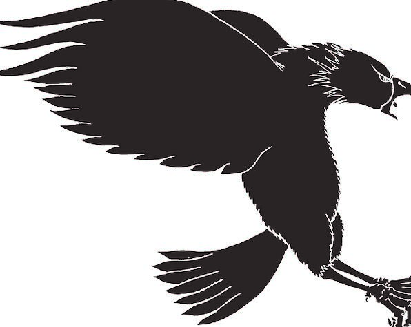 596x475 Eagle, Outline, Bird, Fowl, Silhouette, Wings, Annexes, Landing