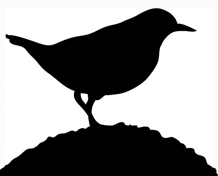737x595 Bird Silhouettes