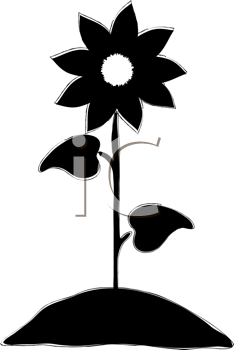 234x350 Black And White Flower