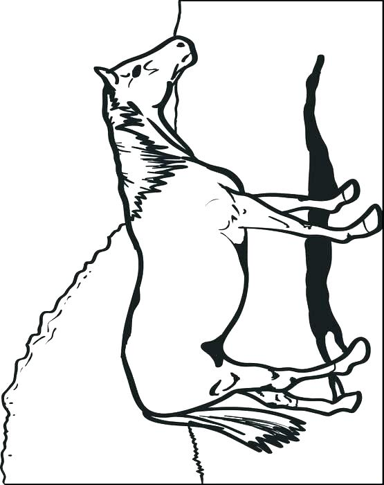 555x700 Horse Head Coloring Page Quarter Horse Coloring Pages Quarter