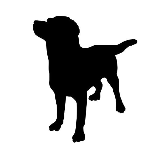 500x500 Dog Walking Amp Pet Sitting