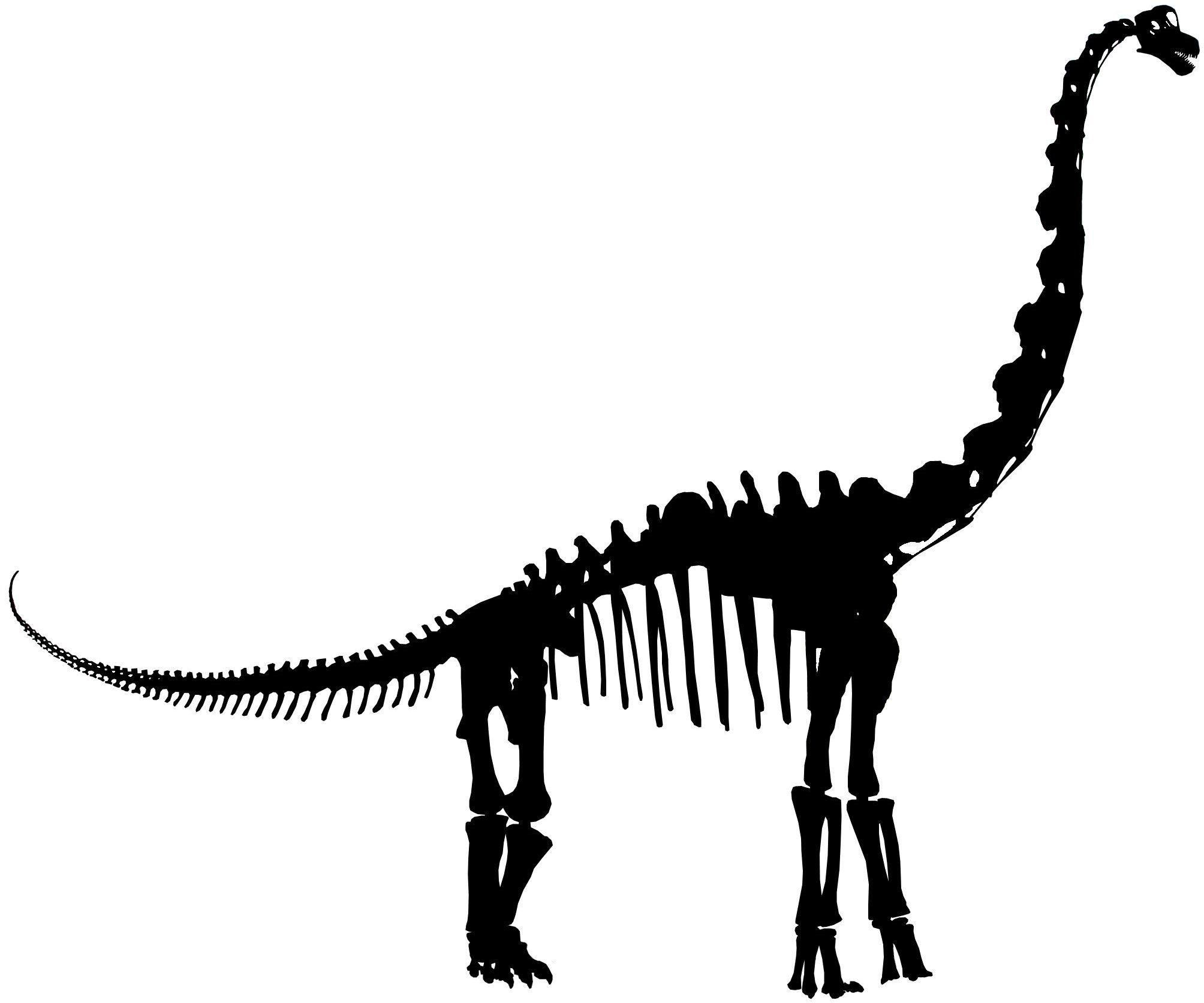 2008x1673 Dinosaur Skeleton Silhouette