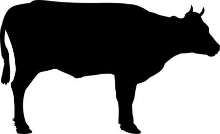 450x275 Skid Steer