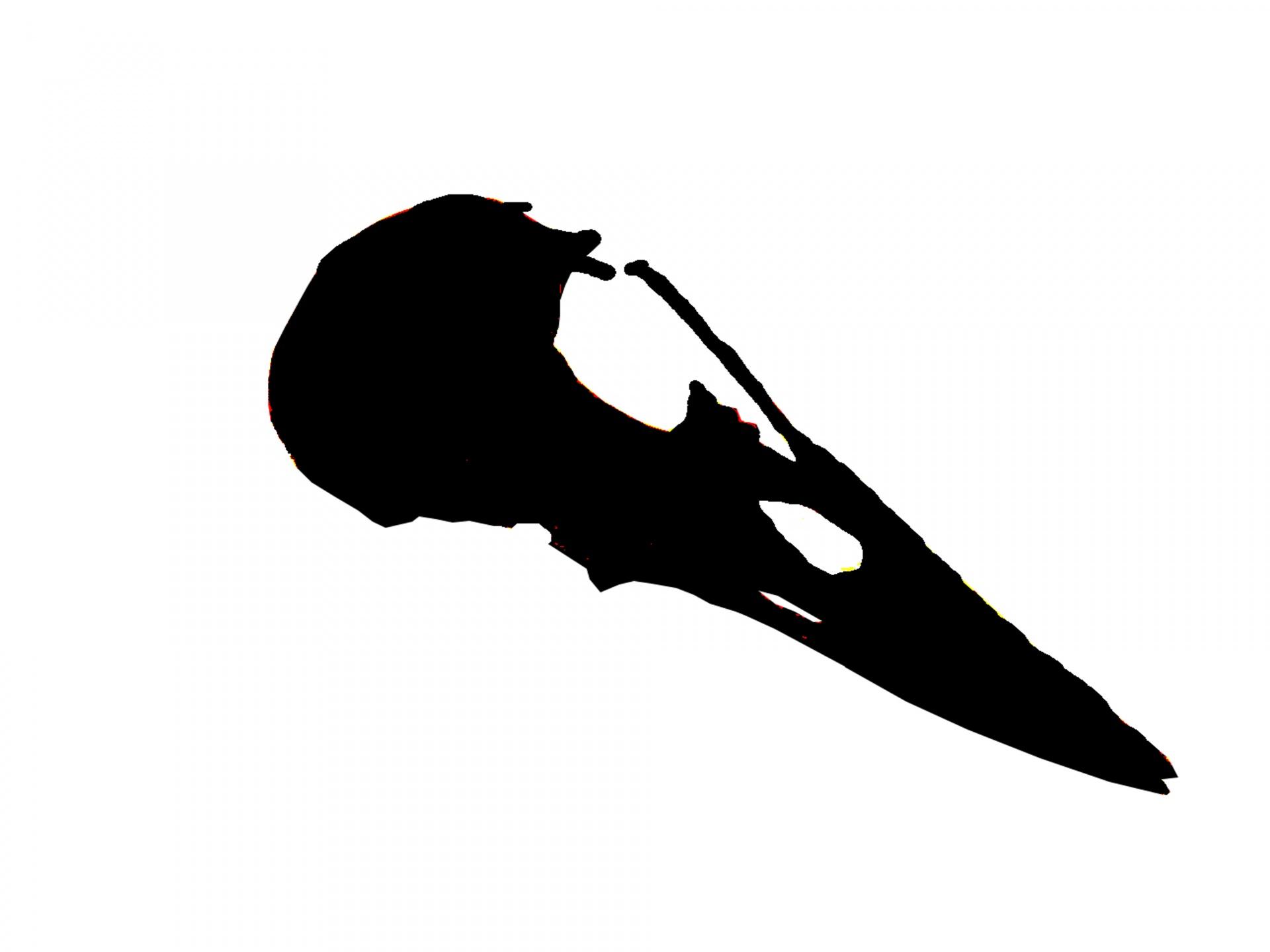 1920x1440 Skull Silhouette Free Stock Photo