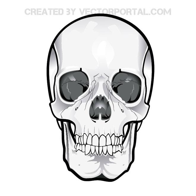 660x660 Skull Vector Clipart 2