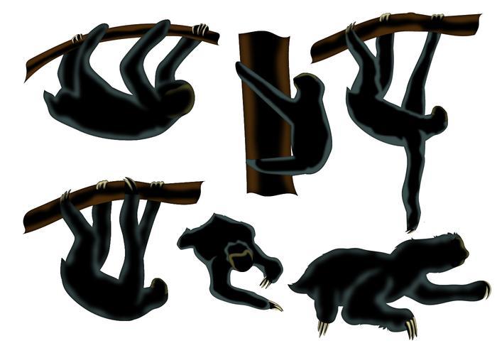 700x490 Sloth Animal Silhouette