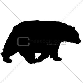 340x340 Image 7385869 Black Vector Bear Silhouette From Crestock Stock Photos