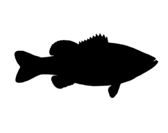 340x270 Bass Decal Etsy