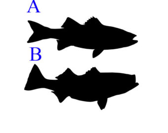 340x270 Bass Fishing Decal Etsy