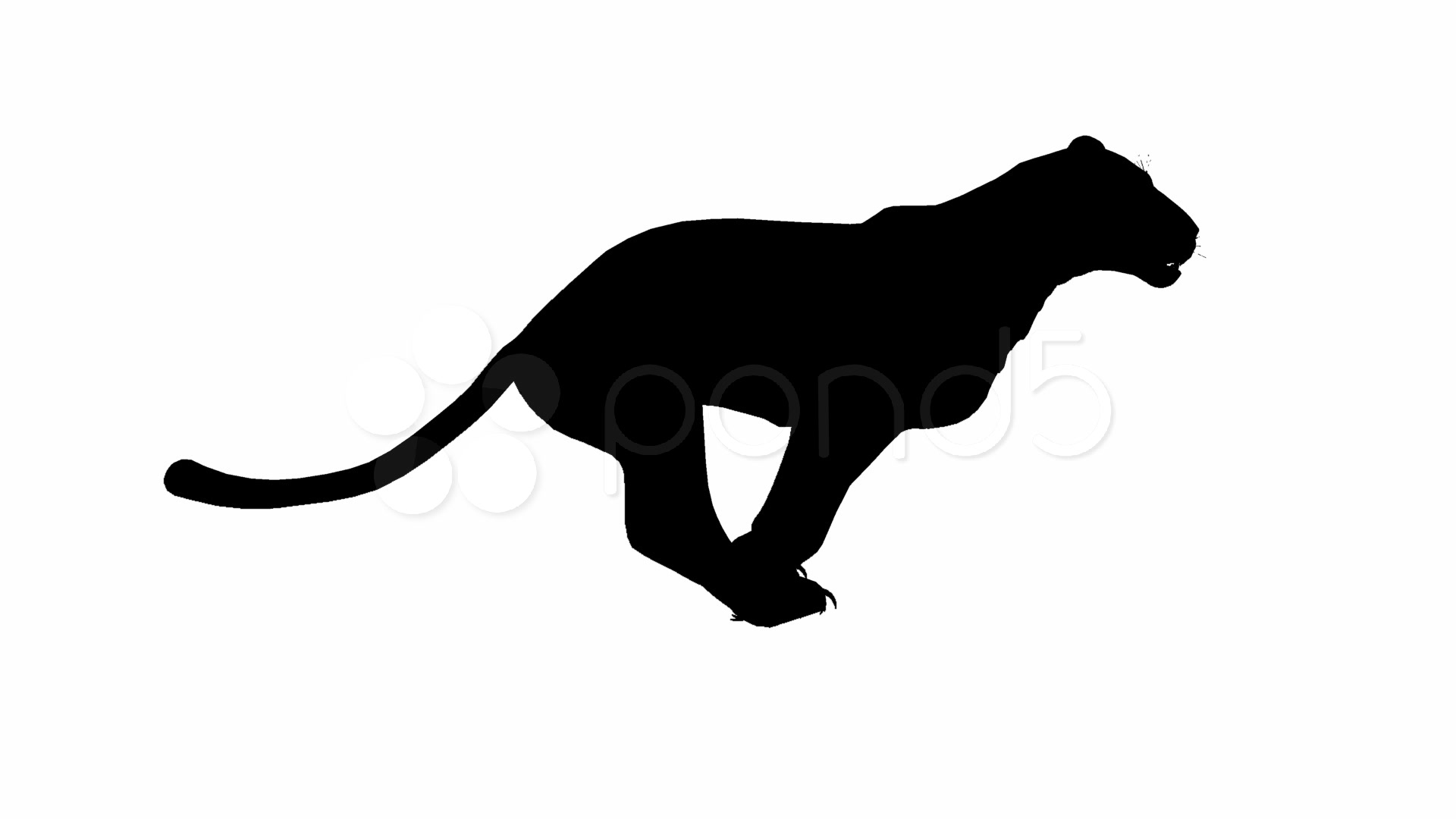 1920x1080 Looping Jaguarpantherleopardpuma Animation With Silhouette