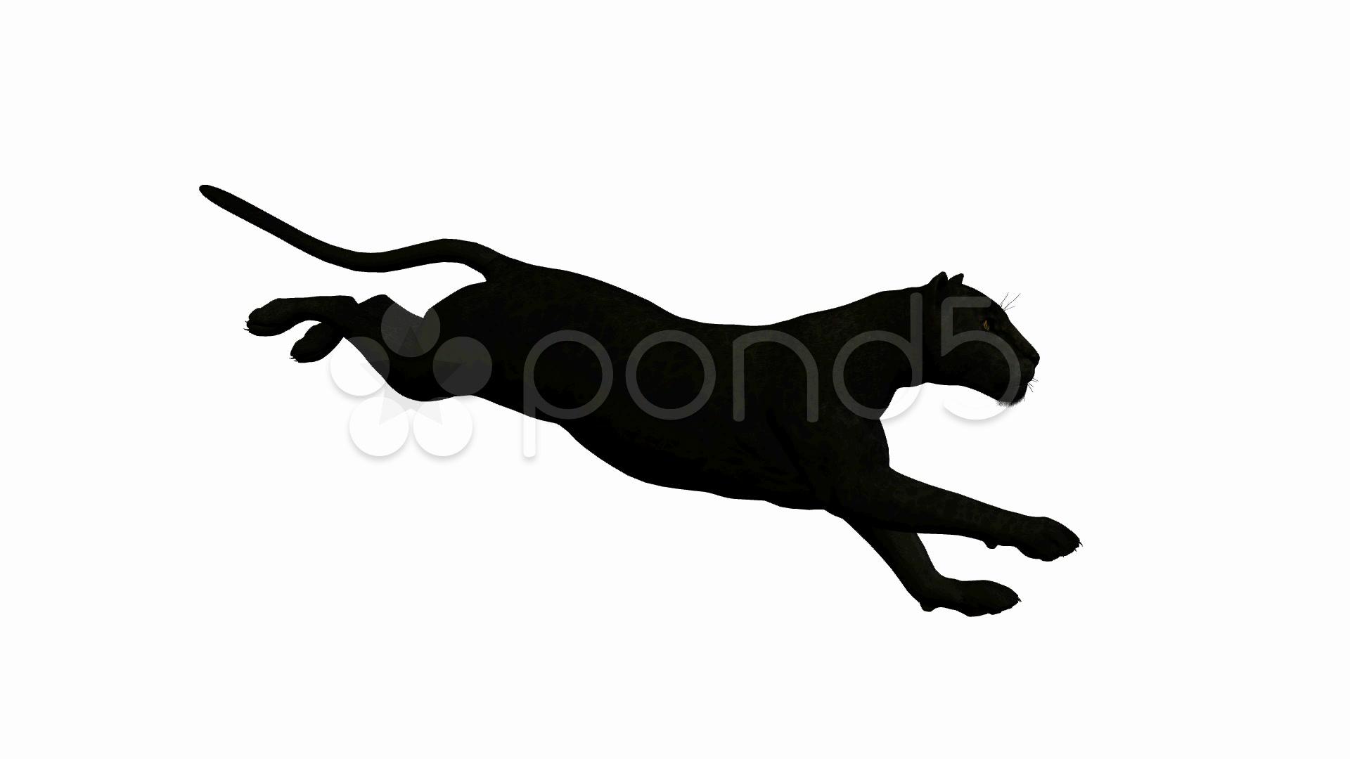 1920x1080 Black Leopard Running ~ Hd Amp 4k Stock Footage