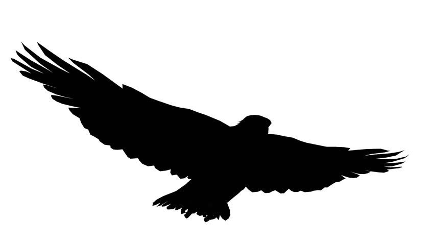 852x480 Flying Eagle 2. Hand Drawn Animation Flying Eagle In The Sky