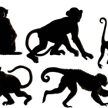 360x360 Monkeys Archives My Graphic Hunt